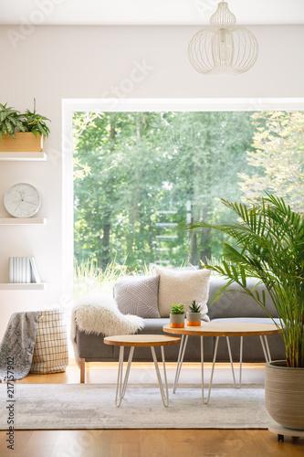 Roślinne i drewniane stoły w jasnym salonie z szarą sofą i oknem. Prawdziwe zdjęcie