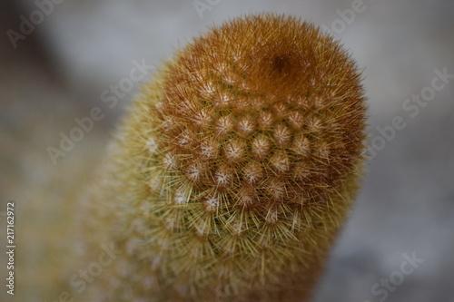 Cactus - 217162972