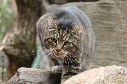 Foto Spatwand Kat Pet cat portrait