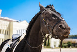 Dark-eyed horse. Black dark-eyed horse submissively standing on big race track before taking part in contest