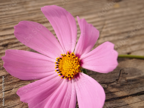 flower aster variety of space on a wooden table on a sunny day