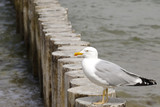 Wooden breakwater and seagull