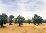 Landscape view of Olive Farm. - 217194959