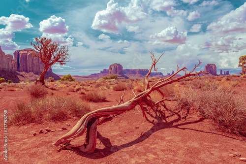 A tree in desert at Monument Valley
