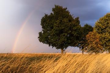 Landschaft Sturm Gewitter Regenbogen © Thomas