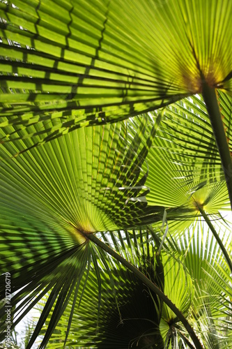 Foto Murales shades and light pattern on palm tree branches