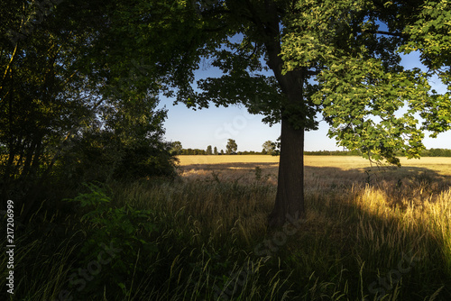 Foto Murales Blick vom Waldrand auf Graslandschaft