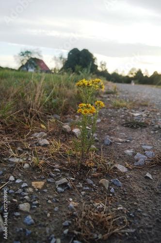 Sticker gelbe Blume auf der Strassse