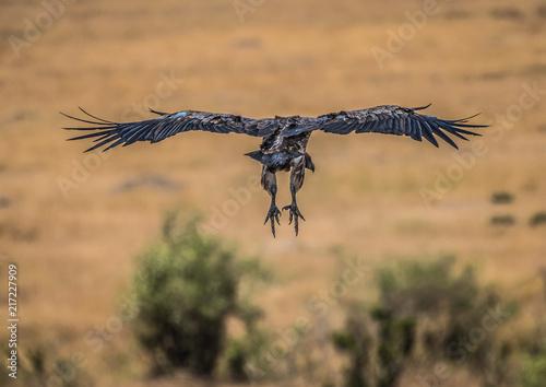 Foto Murales birds