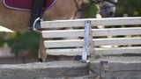 Horse galloping in the background behind wooden fence in slow motion. - 217244950
