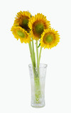 bunch of sunflower in the vase isolated on white background