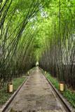 Scenic shady walkway through green bamboo woods after rain