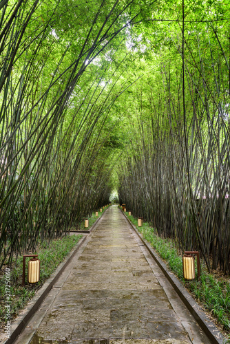 Scenic shady walkway through green bamboo woods after rain