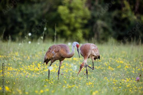 Cranes 3