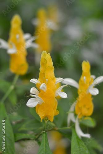 Foto Murales Flores tropicales