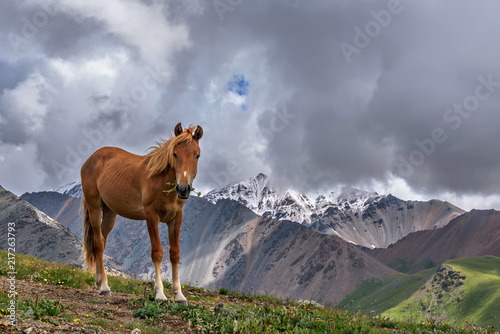 horse brown mountains graze flowers clouds
