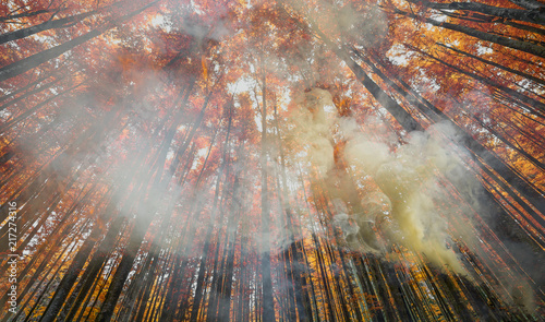 fire in forest - smoke and flames - 217274316