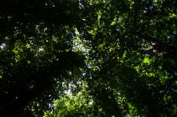 Chiome degli alberi