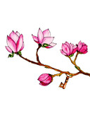 watercolor illustration of pink magnolia and key