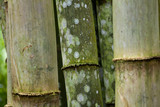 Clouse up of fresh and green bamboo forest