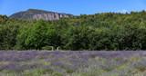 Lavanda Provence Landscape