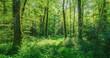 Leinwanddruck Bild - Landschaft zauberhafter Laubwald mit Fußweg im Frühling - Landscape of enchanting deciduous forest with footpath in spring