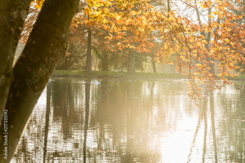 Fotobehang Herfst Tranquil misty pond with colorful autumn trees