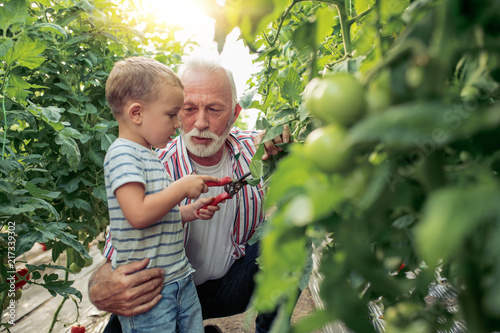 Leinwanddruck Bild Grandfather and his grandson in a greenhouse.