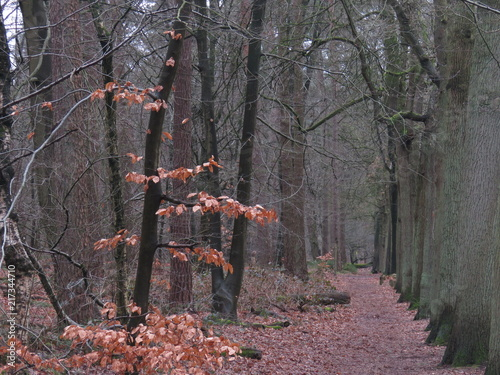 Canvas Lavendel Forest in autumn