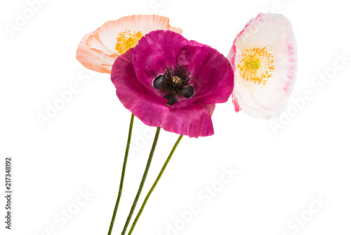 beautiful poppies isolated - 217348192