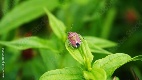 Foto Murales Bug