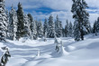 Trees covered with snow. Blue and white colours. Ski resort on Cypress Mountain near Vancouver. British Columbia. Canada.