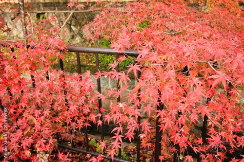 Wall mural 南禅寺水路閣の紅葉