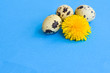 three quail eggs and one flower of a dandelion on a blue background