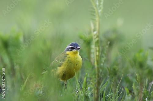Foto Murales Green meadow