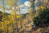 Aspen grove at autumn in Rocky Mountains - 217430547