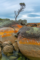 Bay of Fires Lone Tree © Richard