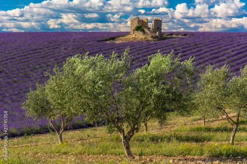 Lawendowe pola i drzewa oliwne w Haute-Provence