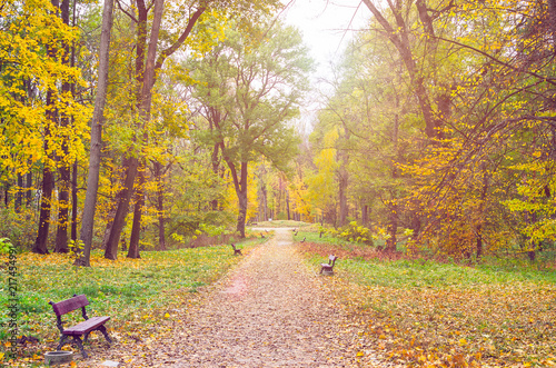 Fotobehang Oranje Beautiful autumn park strewn with fallen leaves