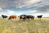 cattle on pasture over blue sky