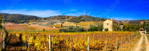 In de dag Wijngaard Golden vineyards. Beautiful Tuscany landscape in autumn colors. Italy