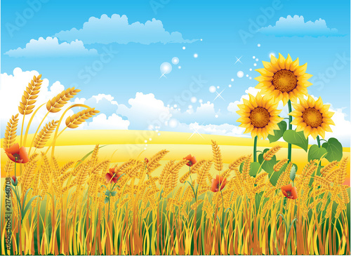 Foto Spatwand Blauw Natural landscape with a wheat field and sunflowers