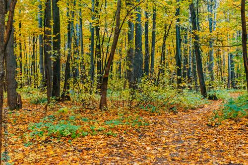 Fotobehang Herfst Colorful autumn landscape