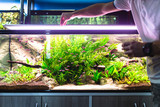 Male worker in aquarium shop feeding fishes. - 217476107