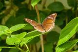 A beleza das cores e padrão de uma borboleta - 217480358