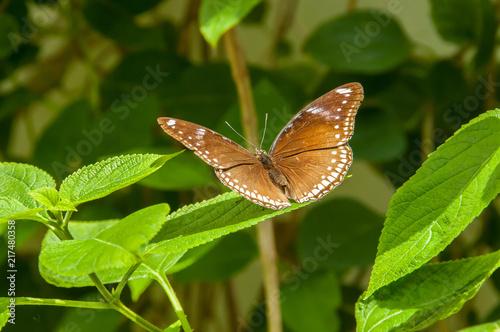 Canvas Vlinder A beleza das cores e padrão de uma borboleta