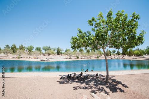 Foto Murales Lake in Las Vegas