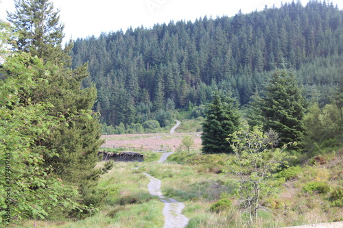 Aluminium Olijf Nature Woodland Landscape Background