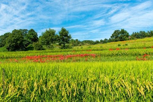 Aluminium Blauw 日本の秋の田園風景