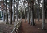 Seal Cove Cypress Tree Grove - 217516964
